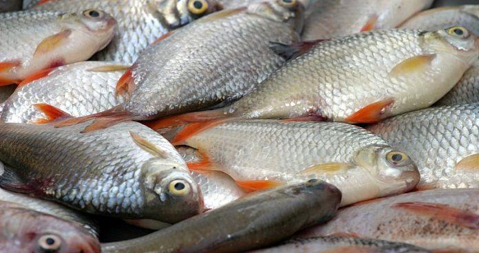 ماهی های جنوب آلوده است؟