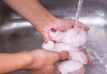 شستن مرغ