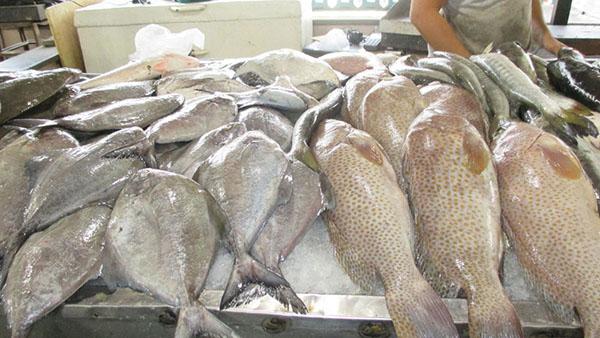 ماهی جنوب